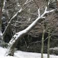 雪積もる枝と枝