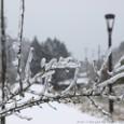 凍り付いた枝