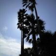 サンビーチの木陰