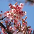 青空と桜のコラボ