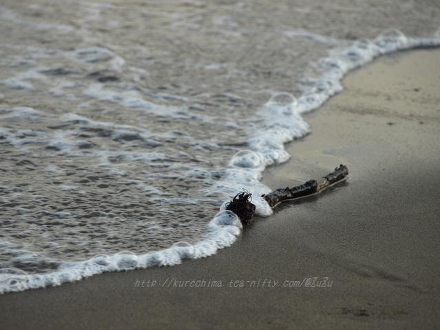 波に洗われた小枝