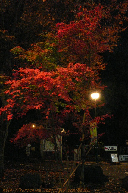 楽寿園北口の紅葉