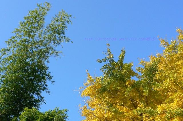 秋の青空と