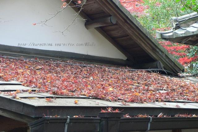屋根の上にもいっぱいの落ち葉