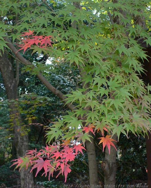 紅葉前、紅葉中、紅葉後