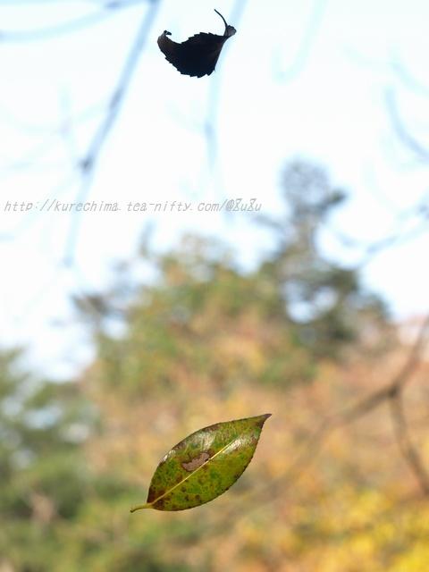 舞う枯れ葉