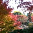七色な紅葉
