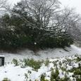 雪を被った案内板