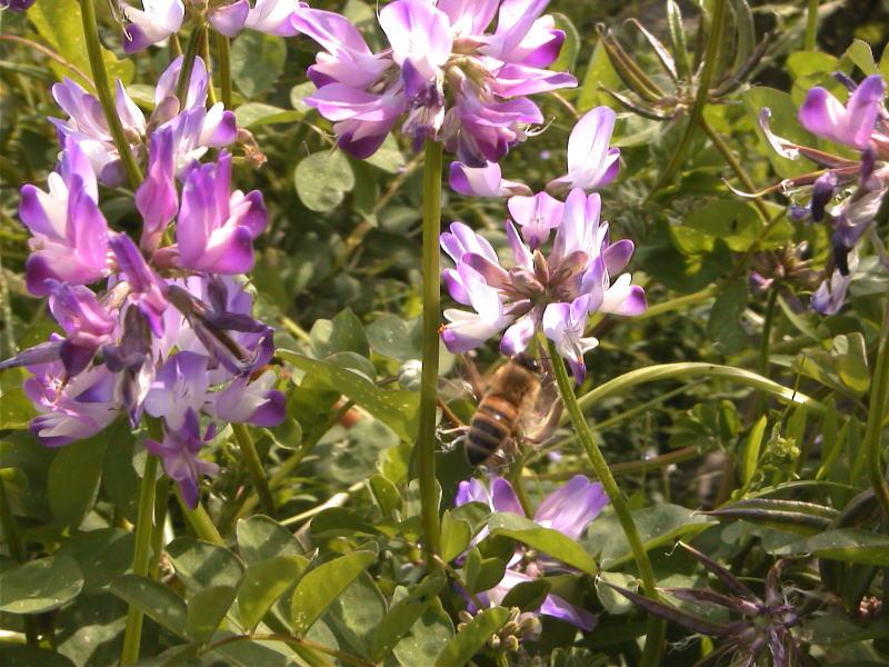 蜂のご馳走