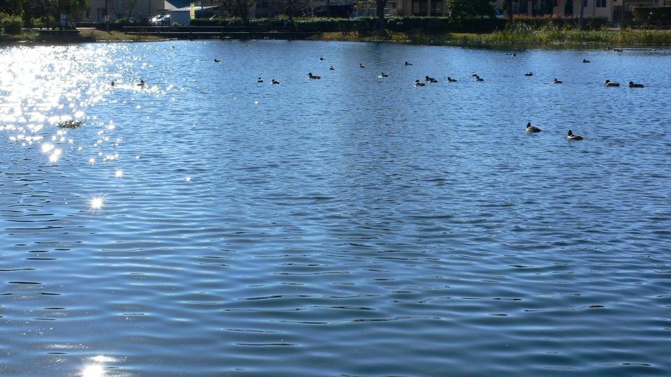 ぎらぎら光る池面