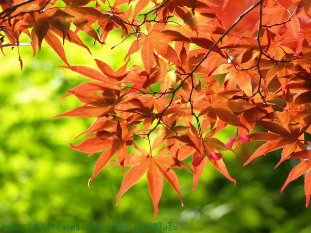 新緑と紅葉色
