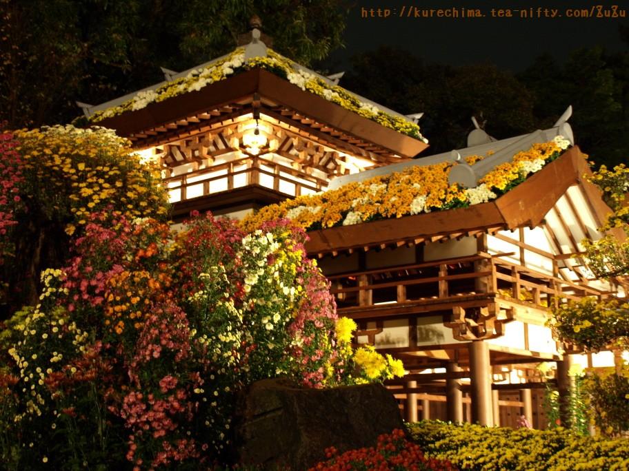 夜菊な光景