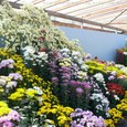 昼間の花壇