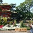 今年の建物~薬師寺