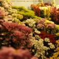 夜菊の花壇Ⅱ