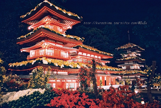 夜菊~薬師院(銀塩版)