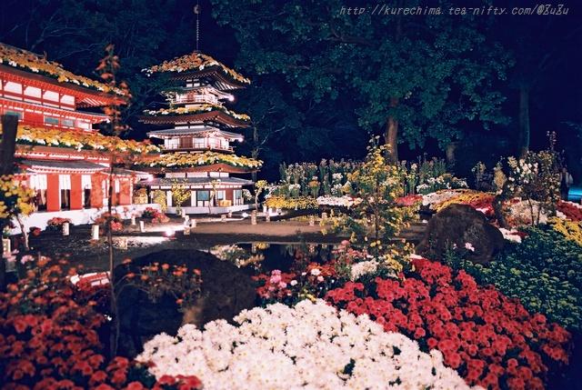 夜菊~薬師院(銀塩版Ⅱ)