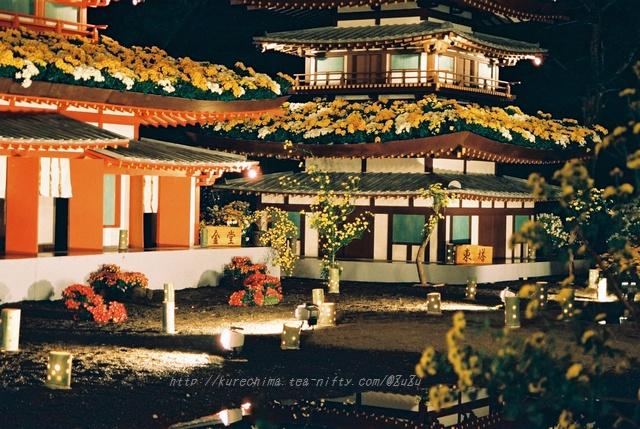 夜菊~薬師院(銀塩版Ⅳ)