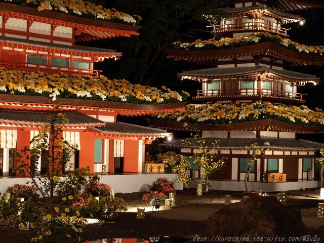夜菊~薬師院