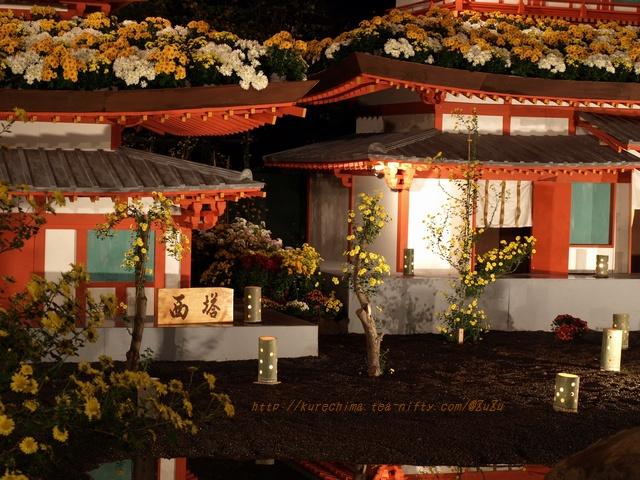 夜菊~薬師院Ⅳ