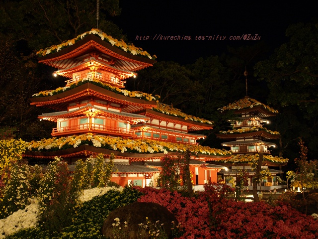 夜菊~薬師院Ⅴ