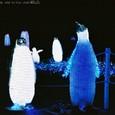 ペンギンたち(銀塩版)