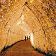 時乃栖の灯り~第二トンネル(銀塩版)