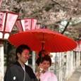 幸せな日に桜と