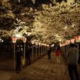 夜桜を撮る人々