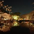 夜桜が映える池面