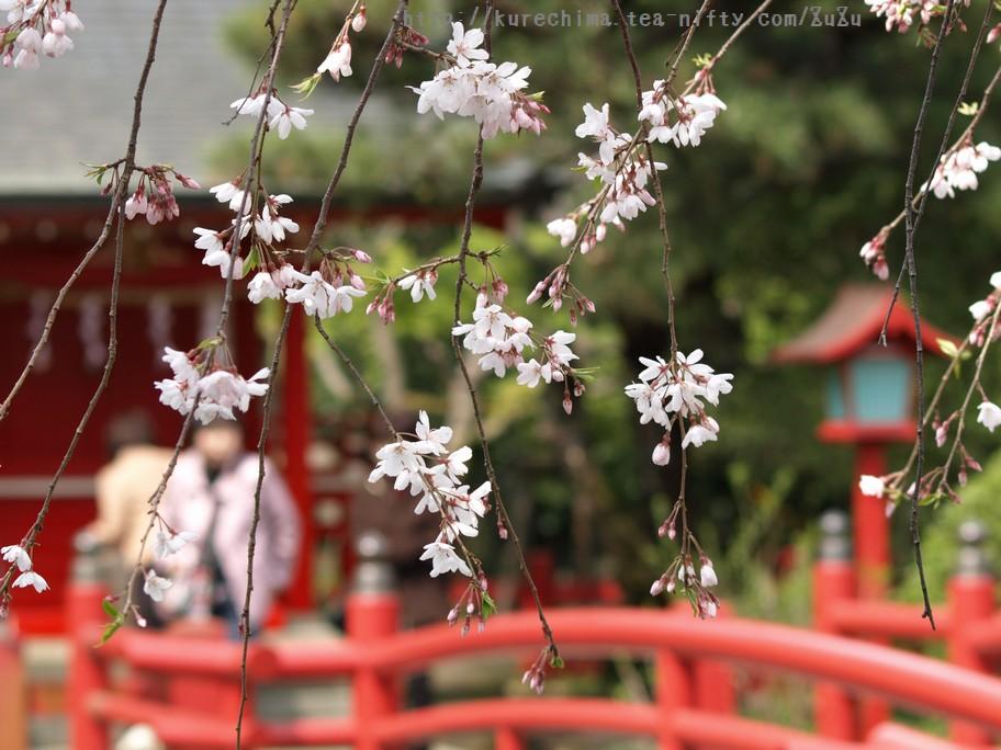 祈願と桜②
