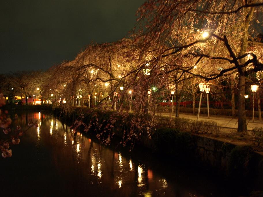 神池に映える夜桜