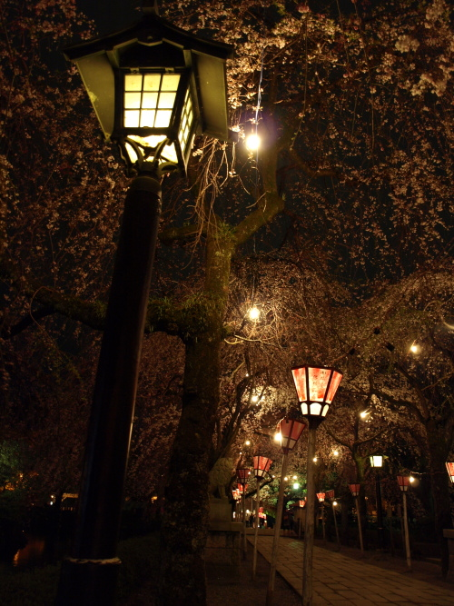 夜の桜を灯す