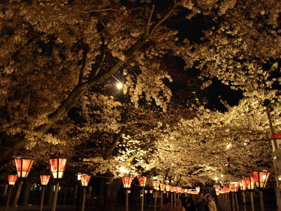 夜桜を見上げて