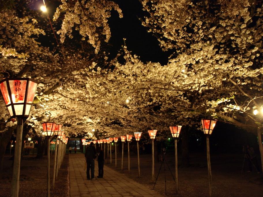 夜桜を撮る人達