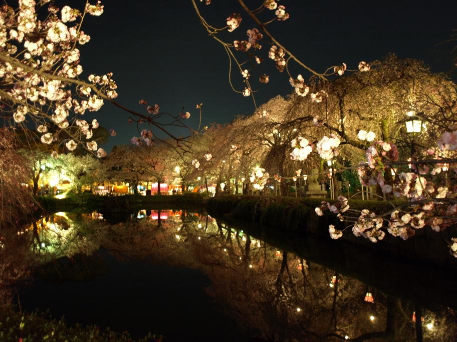 夜桜が映える池面②