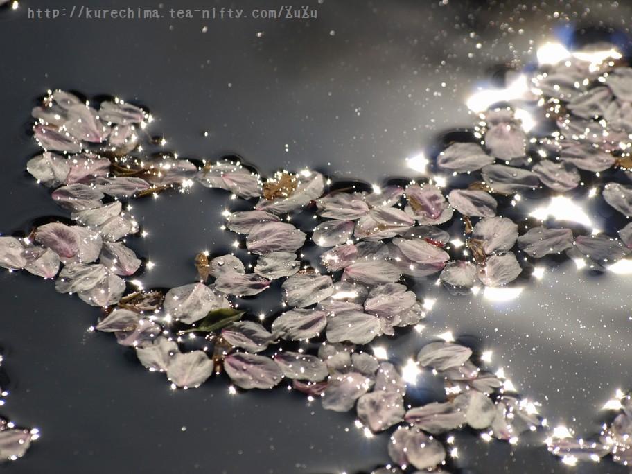 池面に漂う桜