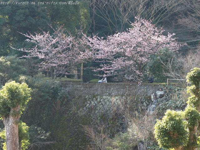 桜の下に佇む