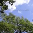 五月の青空