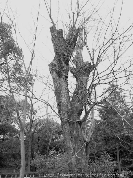 トトロな木