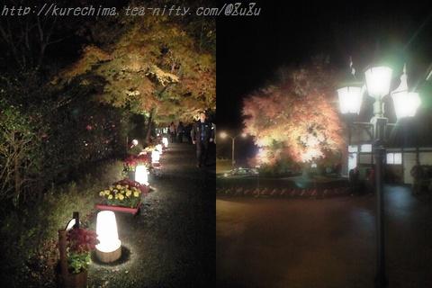 虹の郷の紅葉~ライトアップ